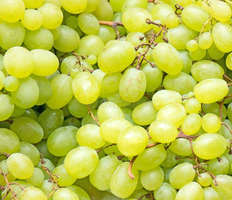 Lote de uvas verdes maduras imagem de stock