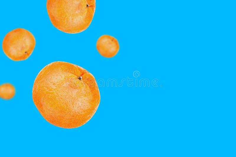 Lote dos mandarino alaranjados deliciosos inteiros frescos que caem na pena no fundo azul com espaço da cópia para seu texto imagens de stock royalty free