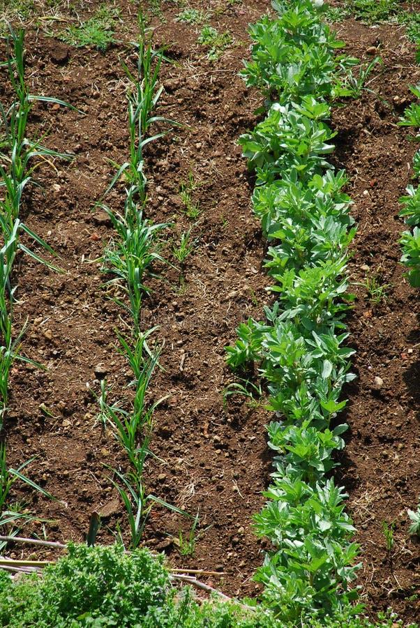 Lote vegetal 1 do jardim imagem de stock royalty free
