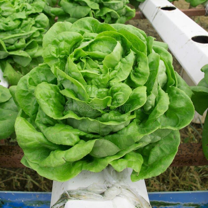 Lote vegetal imagens de stock