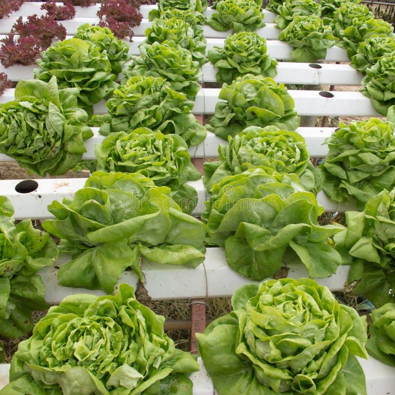 Lote vegetal imagens de stock royalty free