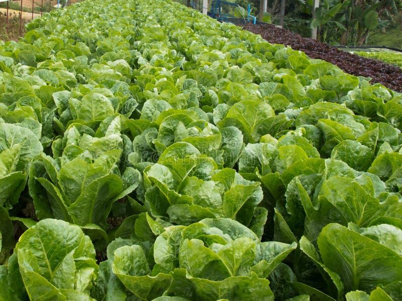 Lote vegetal foto de stock royalty free