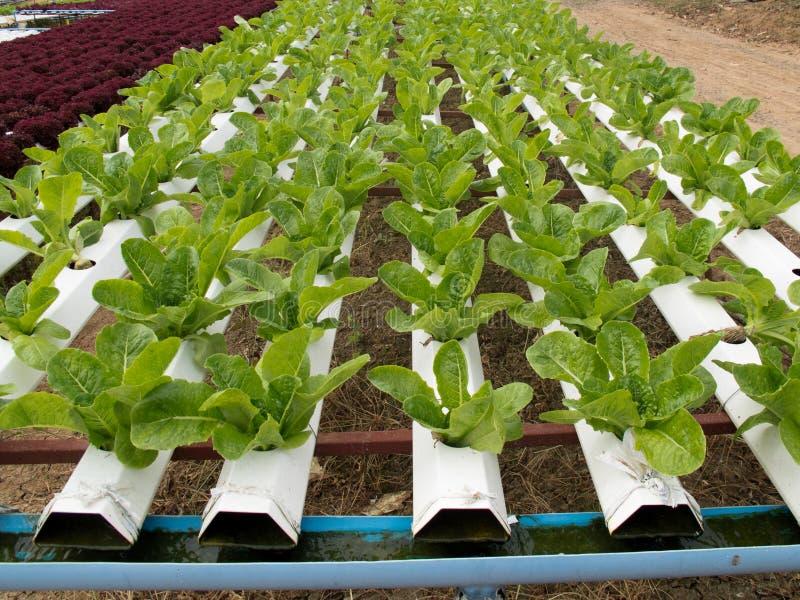 Lote vegetal fotografia de stock royalty free