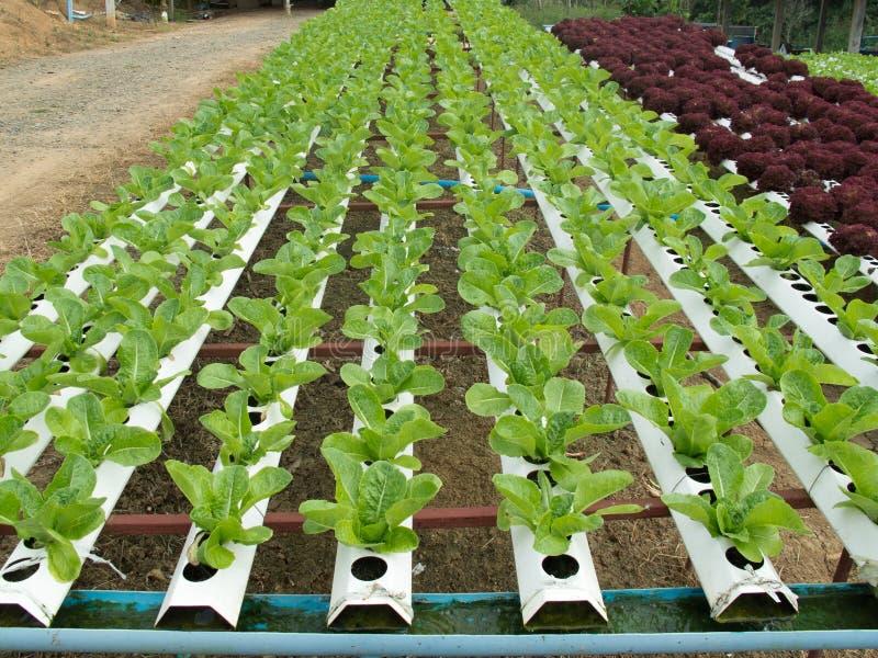 Lote vegetal fotos de stock royalty free