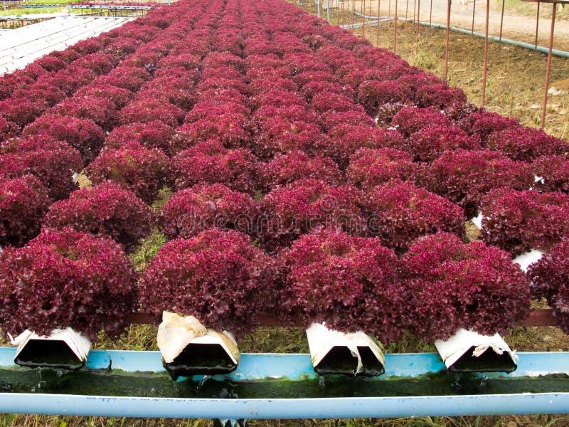 Lote vegetal fotos de stock
