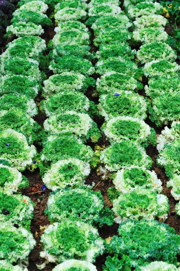 Lote vegetal fotografia de stock