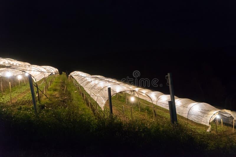 Lote vegetal com iluminação na noite fotos de stock