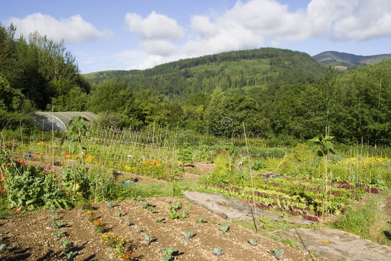 Lote vegetal orgânico imagem de stock