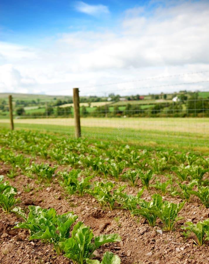 Lote vegetal rural imagem de stock