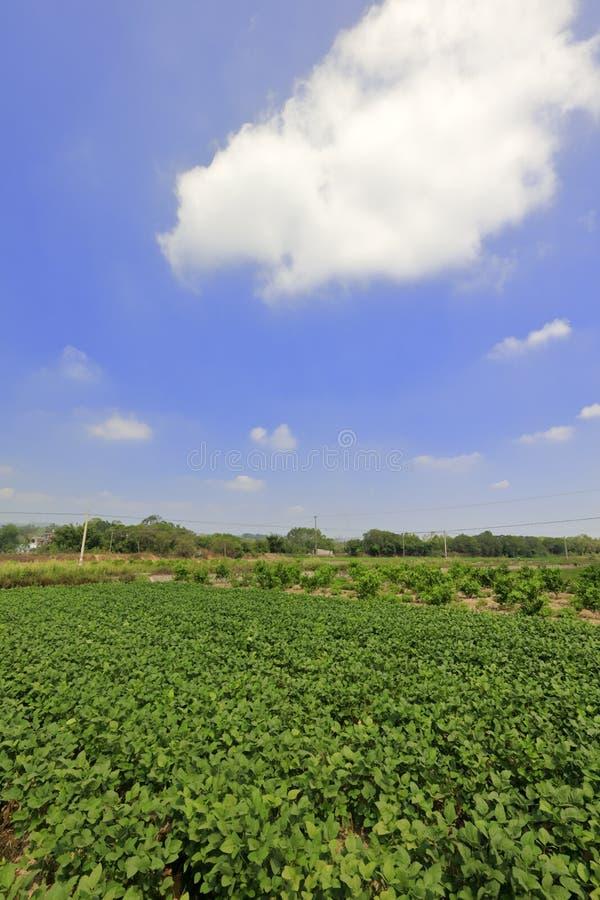 Lote vegetal sob o céu azul, adôbe rgb imagens de stock