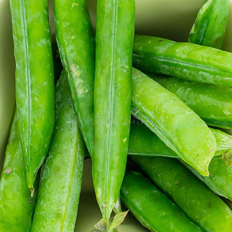 Lote verde do feijão de ervilhas da vagem dos vegetais fundo fresco do projeto do close-up do projeto do fundo verde foto de stock