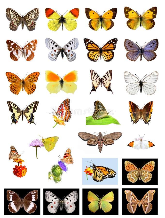 Lotes das borboletas imagens de stock