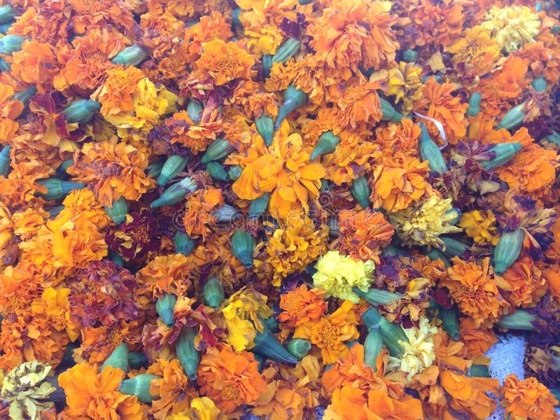 Lotes das flores imagem de stock