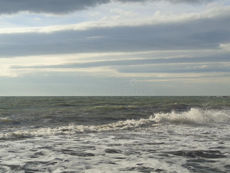 Lotes das gaivotas na água, mar tormentoso foto de stock royalty free