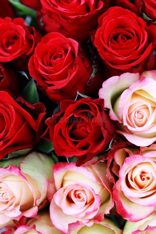 Lotes das rosas fotografia de stock royalty free