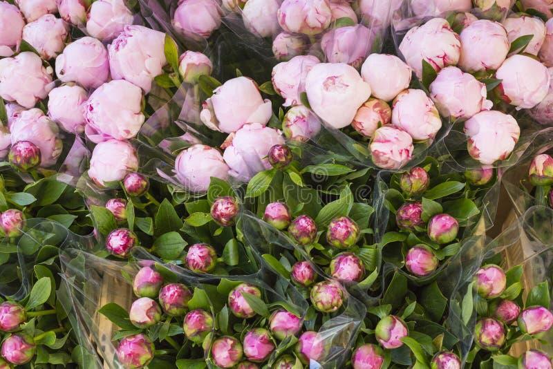 Lotes de peônias violetas e cor-de-rosa bonitas e românticas em sh floral imagens de stock royalty free