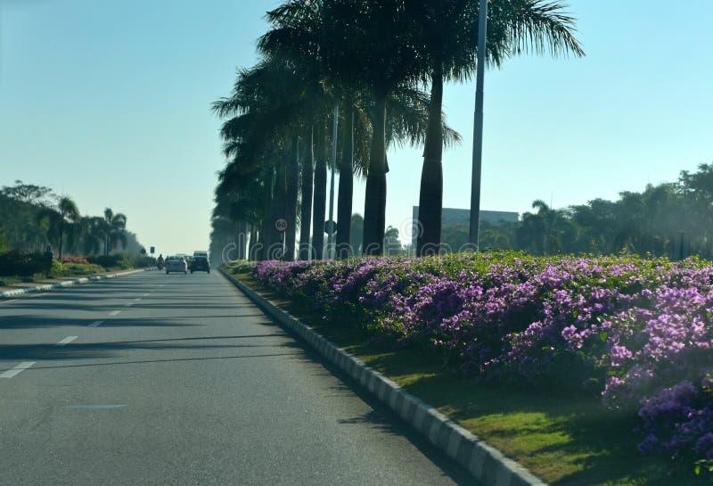 Lotniskowa podejście droga z naturalnymi kwiatami - akcyjna fotografia fotografia royalty free