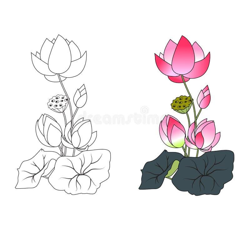Loto di fioritura, colorante illustrazione di stock