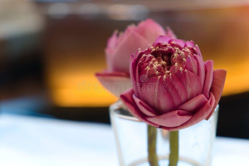 loto Porpora-rosa in un vetro trasparente di acqua, disposto sulla tavola dell'alimento nel ristorante immagine stock