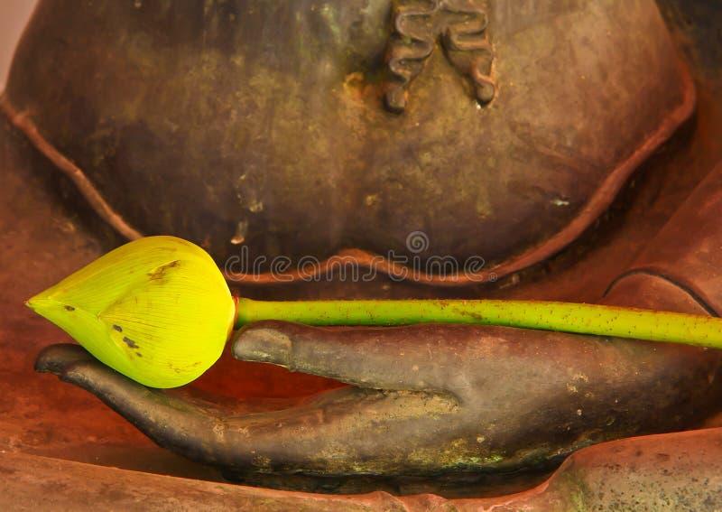 Lotos auf Buddhas Händen stockfoto