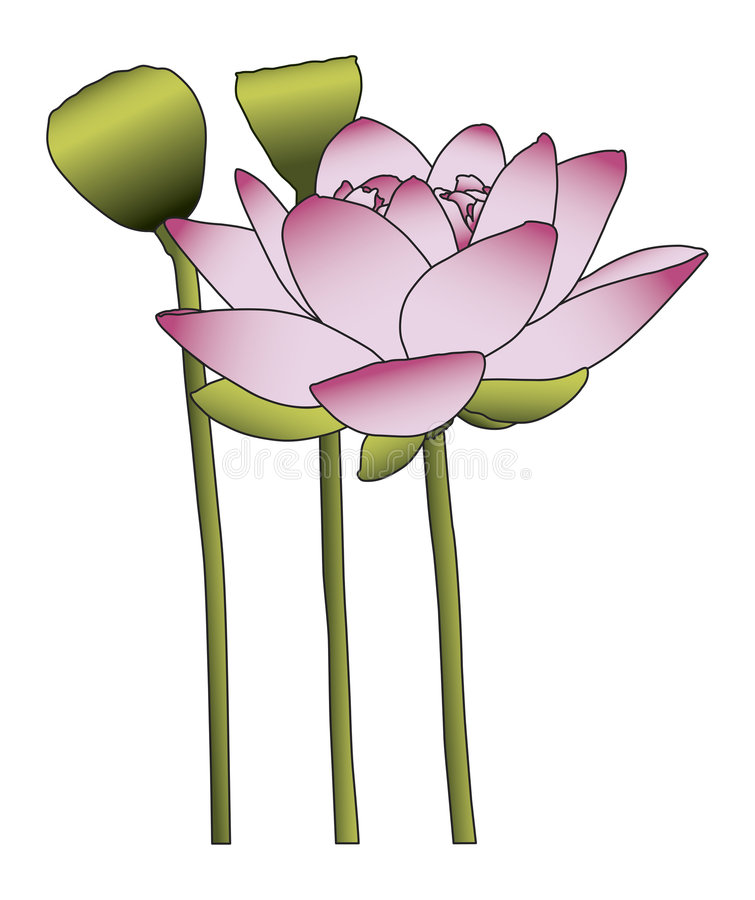 Lotos-Blume lizenzfreie abbildung