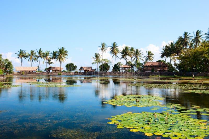 Lotoslagune in Bali stockfoto
