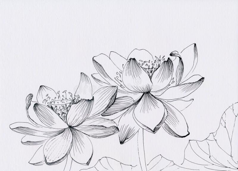 Lotosowa kreskowej sztuki ilustracja ilustracja wektor