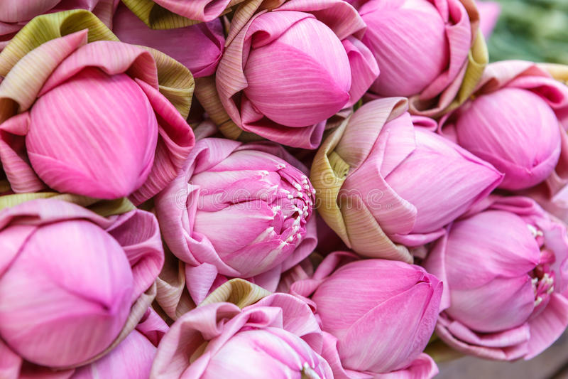 Lotosowego kwiatu kwiat zdjęcie stock