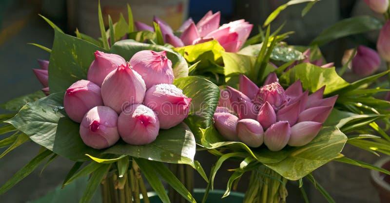 lotosowi bukietów pączki obraz royalty free