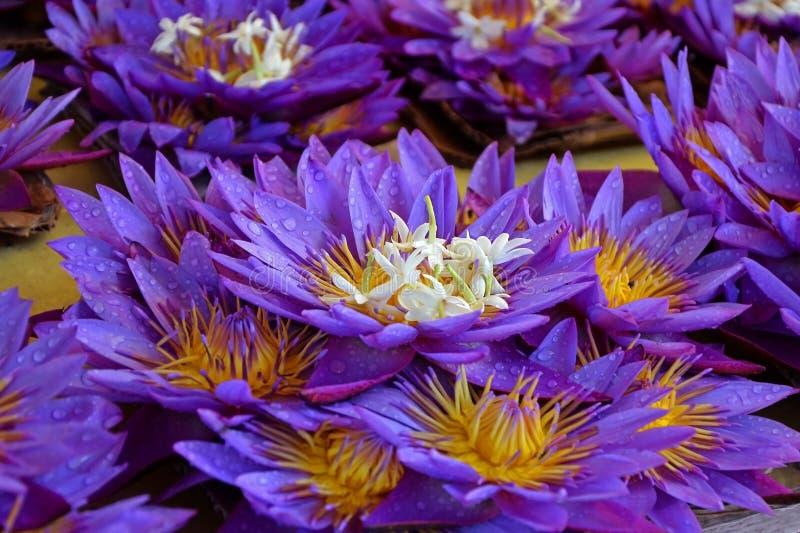 Lotosowi kwiaty z kroplami rosa Sprzedaż kwiaty, świeżość, ranku kwiaty kolekcja fotografia stock