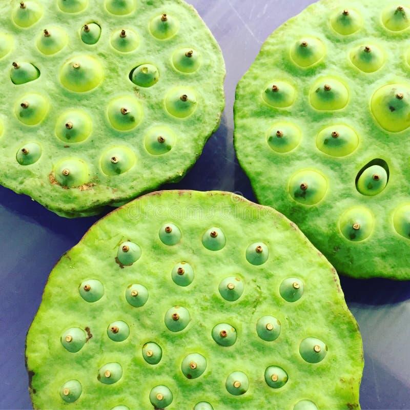Lotosowi ziarna obrazy stock