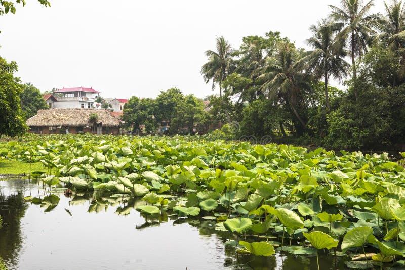 Lotosowy jezioro w antycznej wiosce w Hanoi fotografia royalty free