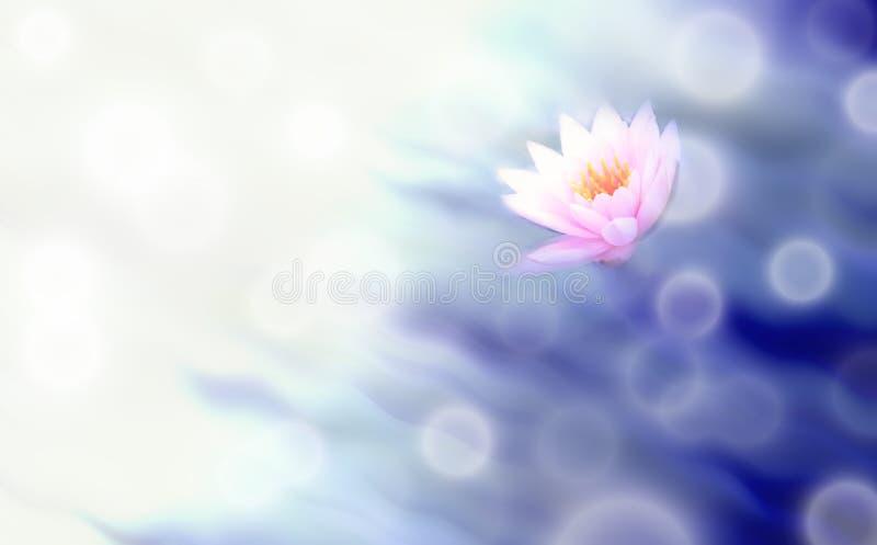Lotosowy kwiat i zamazany abstrakcjonistyczny tło ilustracja wektor