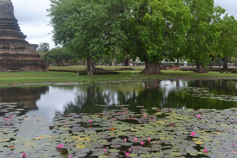 Lotosowy parc obrazy royalty free
