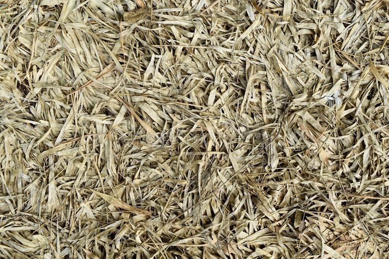 Lots brown dry bamboo leaf for background stock photos