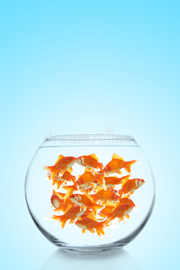 Download Lots Of Colorful Goldfishes Stock Photo - Image: 10855096