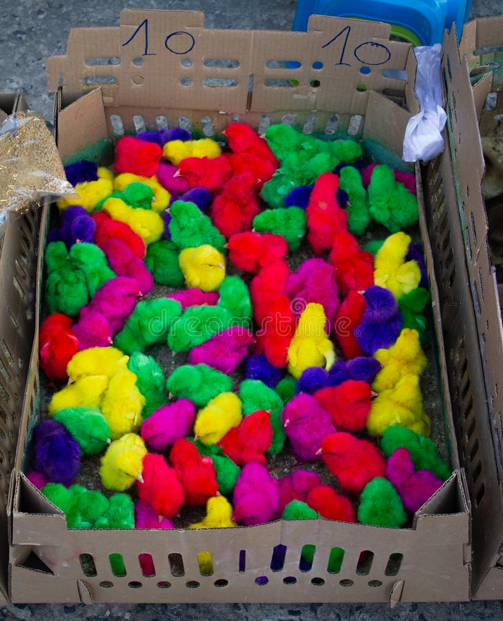 Lots of colorful little chicken in a box, selling at market thailand stock photography