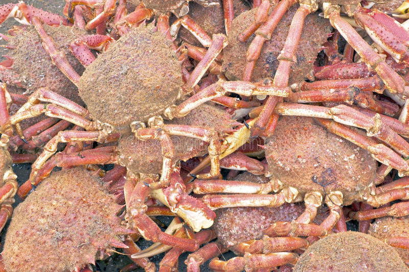 Download Lots of crabs stock image. Image of casserole, shrimp - 36951045