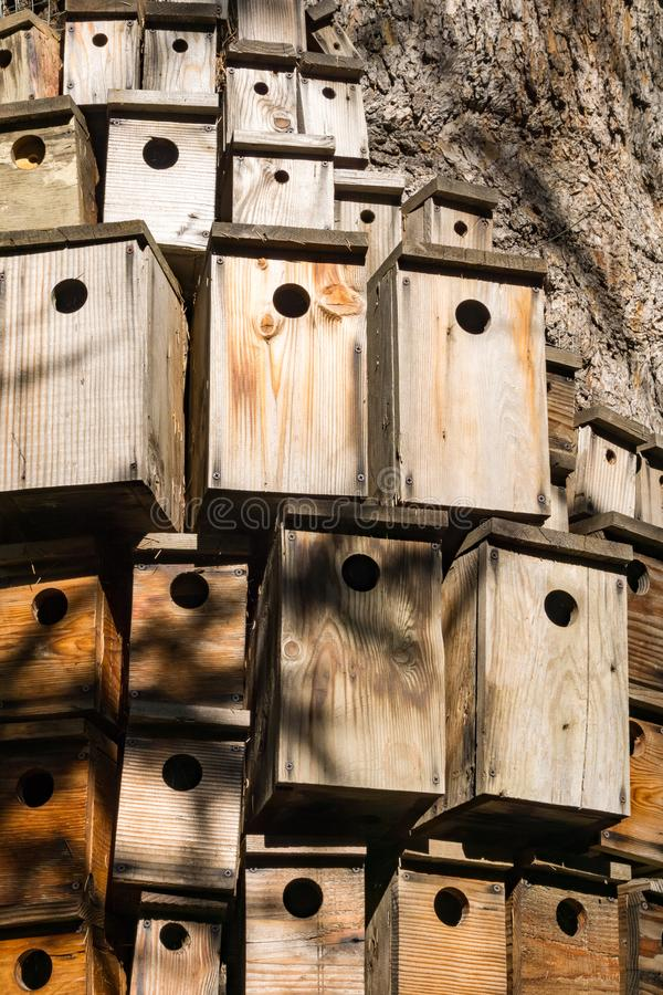 Lots of decorative nesting boxes on the trunk of a large tree, California stock image