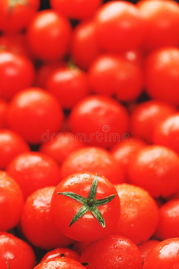 Lots of fresh ripe tomatoes with drops of dew. Close-up background with texture of red hearts with green tails. Fresh cherry stock photo
