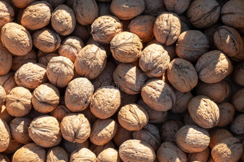 Lots of fresh walnuts royalty free stock photo