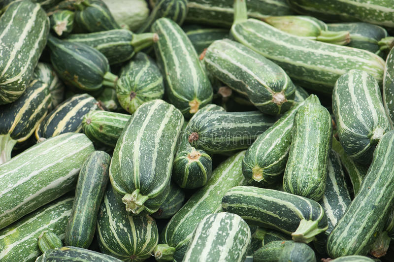 Lots of fresh zucchini stock photo
