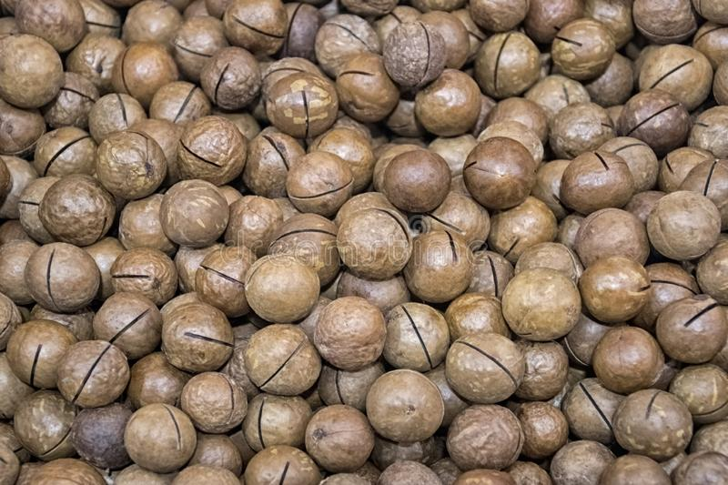Lots of inshell macadamia nuts on the market counter. Texture stock image