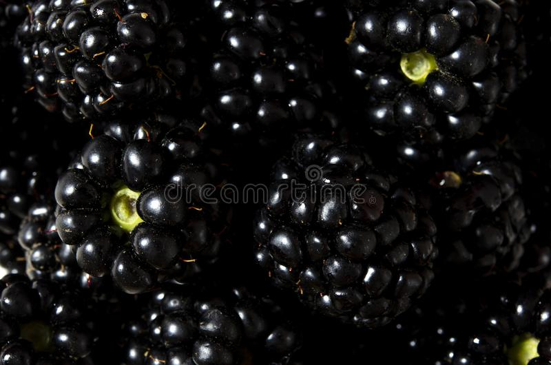 Lots of large juicy black blackberry berries close up stock photography