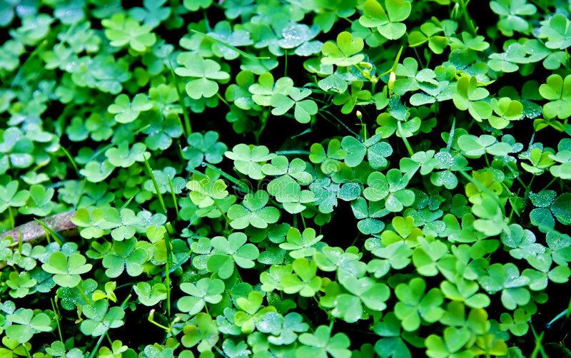 Lots of luck royalty free stock photo