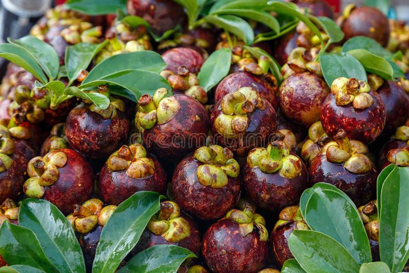 Lots of mangosteen fruit stock images