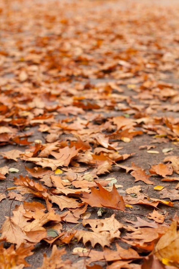 Free Lots Of Orange Leaves Stock Photo - 45836650