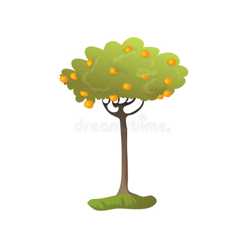 Lots of orange oranges on the tree. Vector illustration on white background. vector illustration
