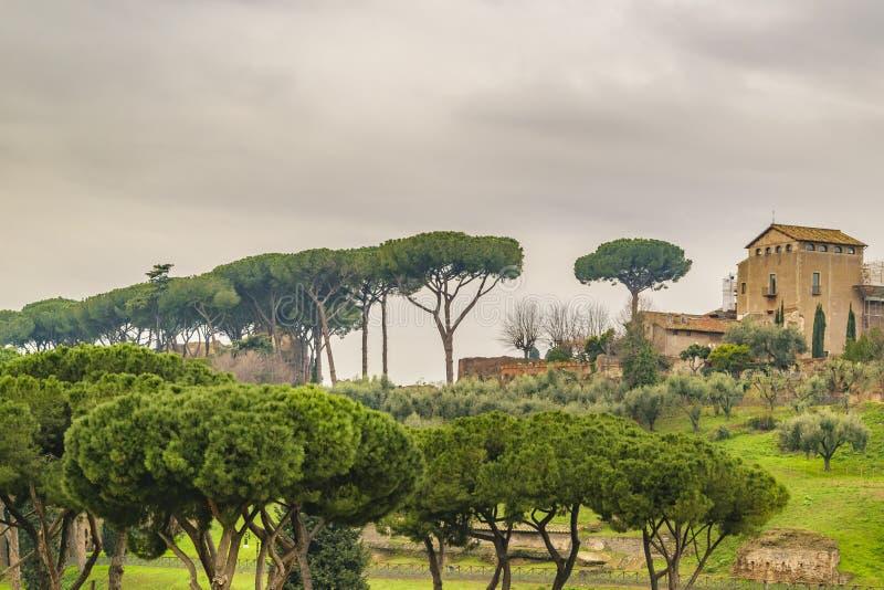 Via Sacra, Rome, Italy. Lots of pines and buildings at via sacra at Rome city, Italy royalty free stock photos