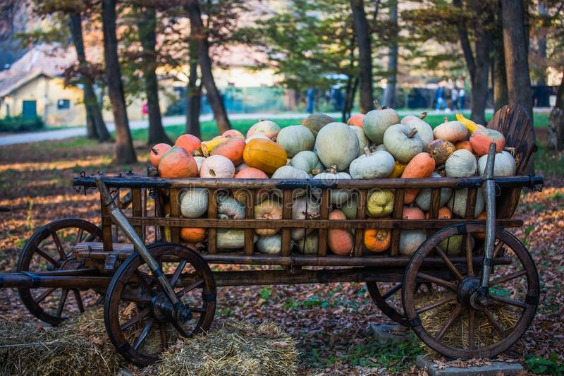 Lots of pumpkins in a wagon royalty free stock photos